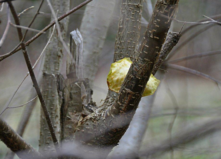 atet-apple
