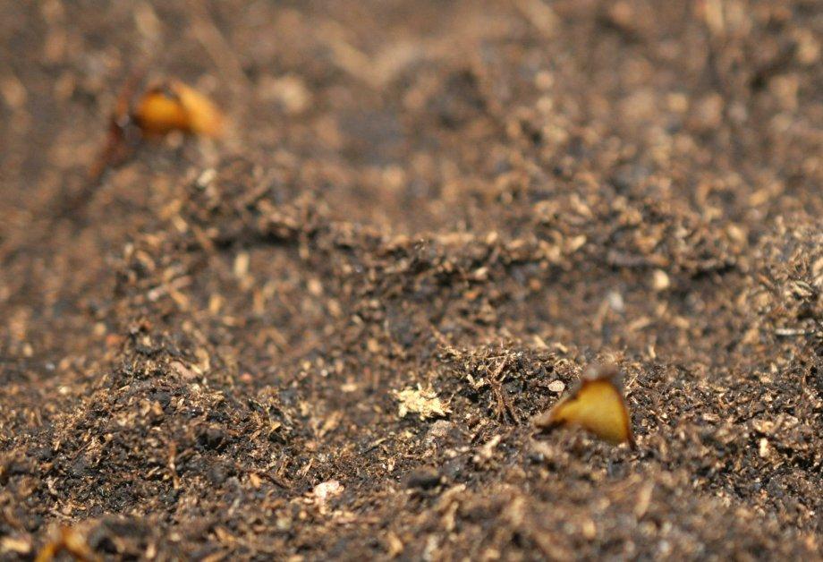 planterade-krolliljefjall