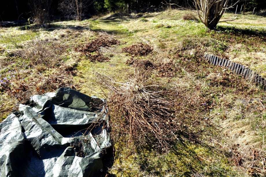 Trädgårdsklipp vårstädning rabatt