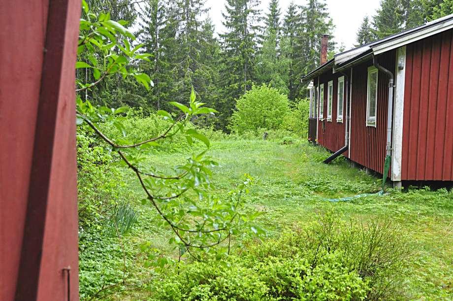 gröna växter bakom stugan