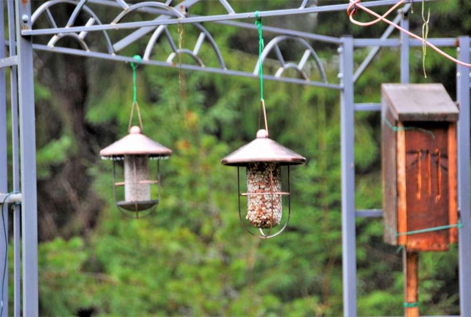 två fågelmatare och fjärilsholk