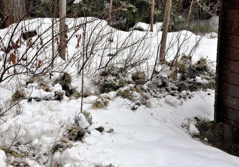djupt bökad fåra i djupfryst mark vildsvin