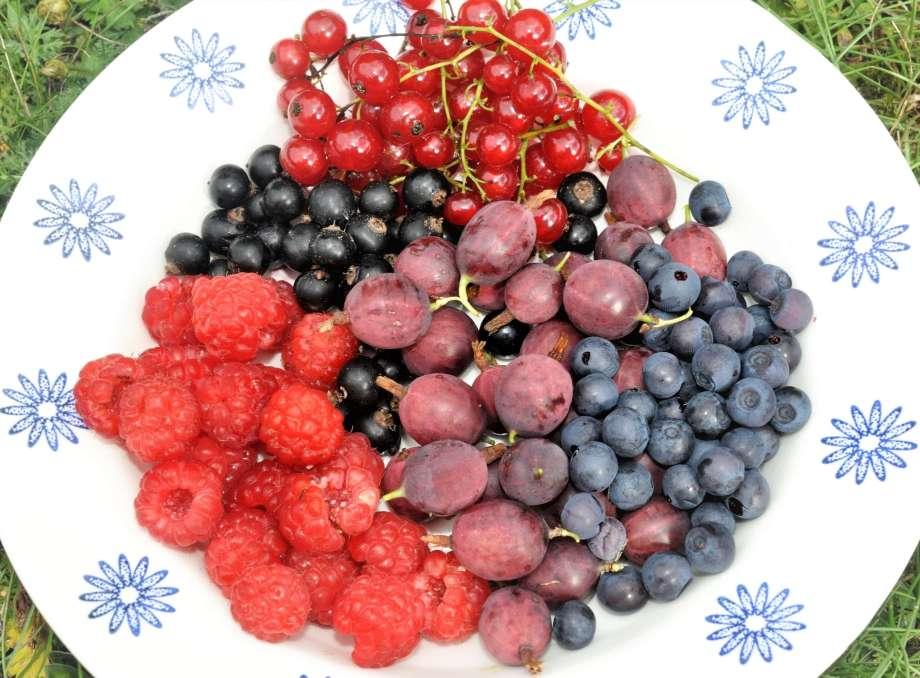 hallon, röda vinbär, svarta vinbär, blåbär och röda krusbär på en vit tallrik med blått blommönster längs kanten.