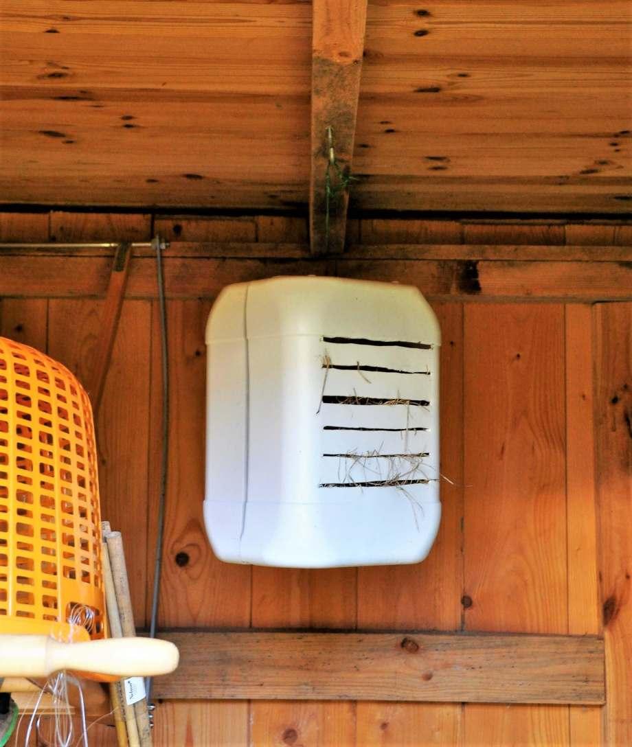 övervintringsholken för guldögonsländorna är upphängd för vinterförvaring i redskapsboden