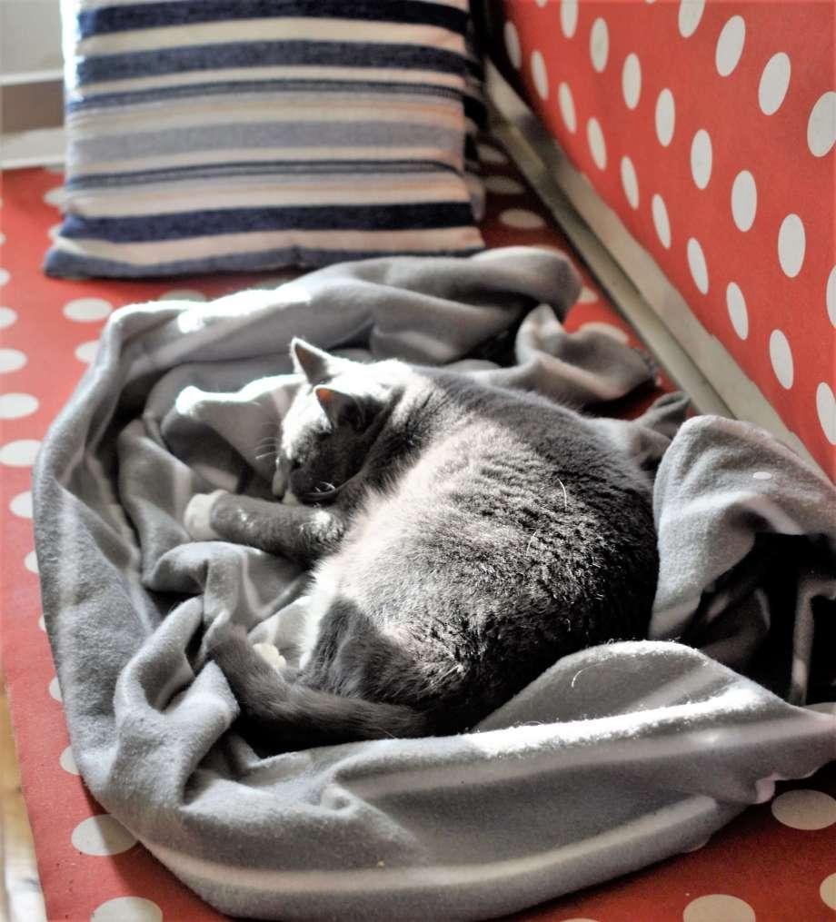 grå katt liggande på gråvit pläd på ett gammaldags sofflock