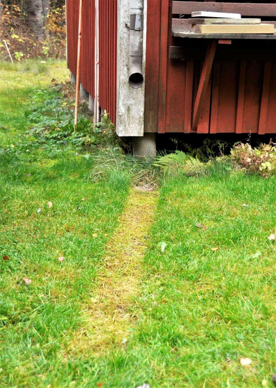 blekt spår i gräsmattan av rain drain