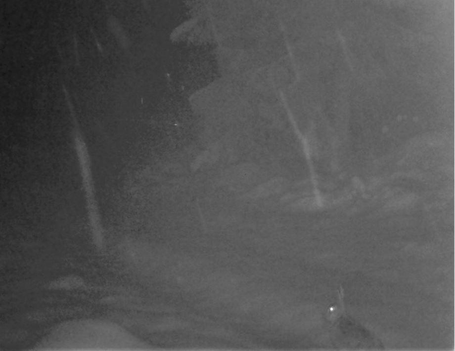 nattbild av skogshare som sitter i snöfall.