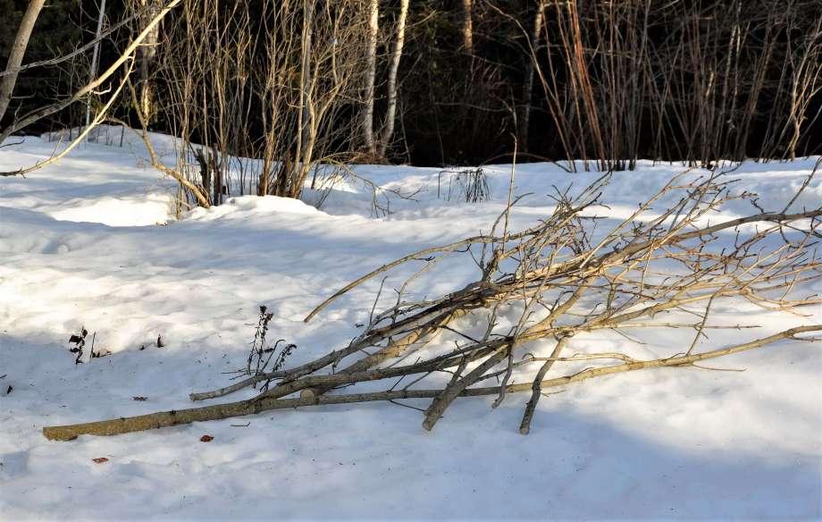 grova grenar ligger på snötäcket