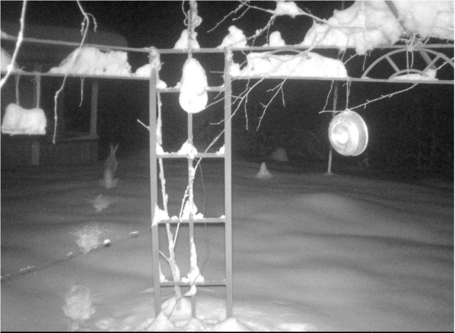 haren skuttar bort från oss och vi ser hur snön sprätter från baktassarna