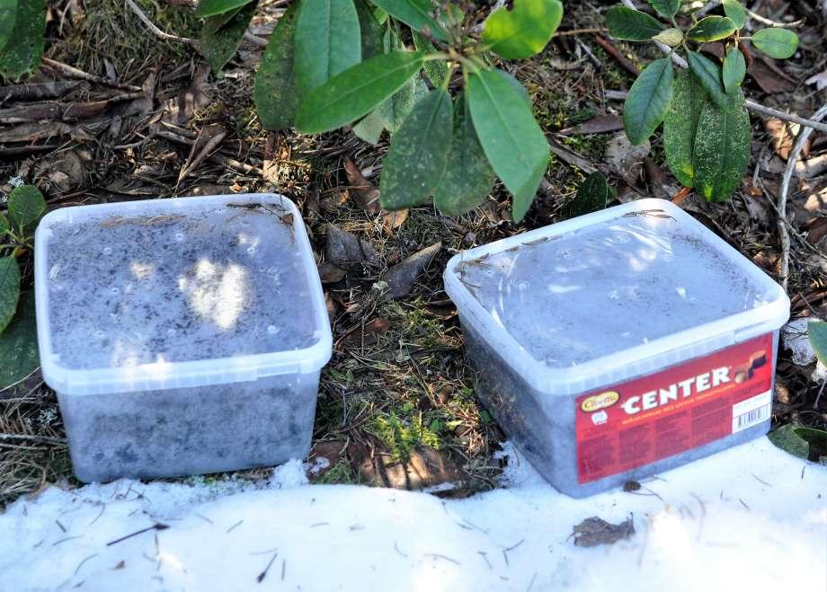 två av godislådorna med vintersådd har tillfälligt töat fram vid rhododendronbusken