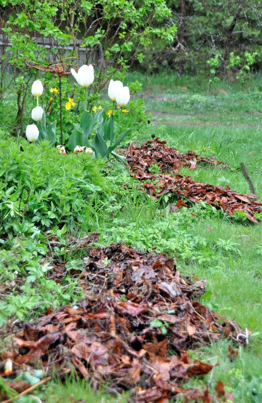 längs kanten på den vildvuxna rabatten ligger högar av bruna fjolårslöv