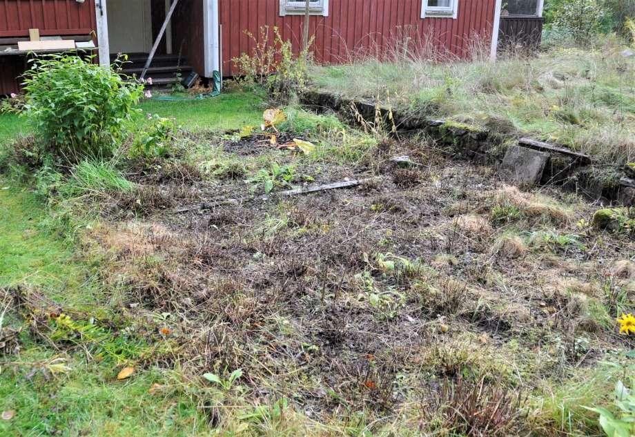 ett trädgårdsland som är nedklippt och brunt, i bakgrunden en röd stuga med vita knutar