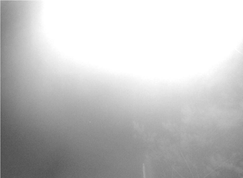 diffust ljus framför kameran när ugglan flyger över den