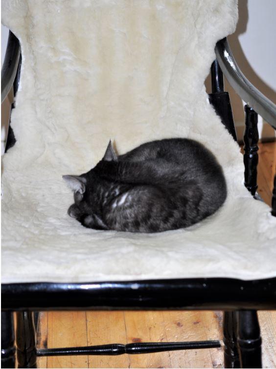 gråsvart katt sover ihoprullad på den vita fårfällen i en gungstol.