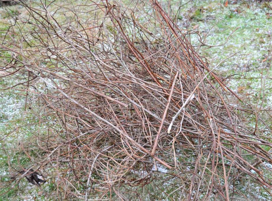 en hög med utgallrade hallonkvistar ligger på gräsmattan