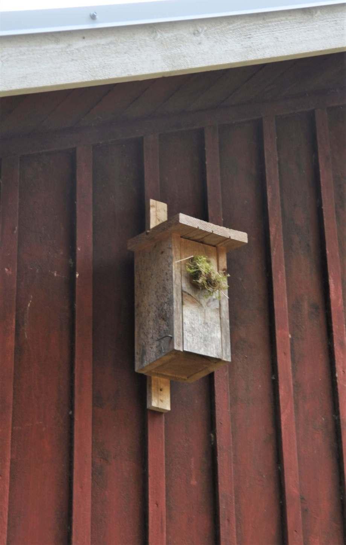 mesholk på husvägg med hålet igenstoppat med en kork och mossa.