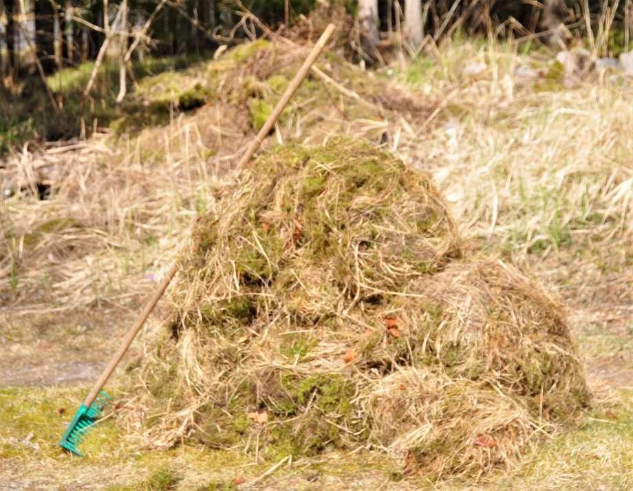 En stor hög med mossa och fjolårsgräs. Mot den står en kratta lutad.